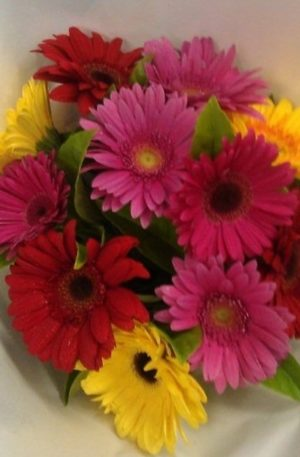 Bright and Happy Gerberas