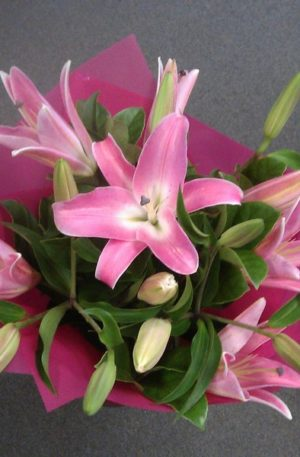 Fragrant Oriental Lillies